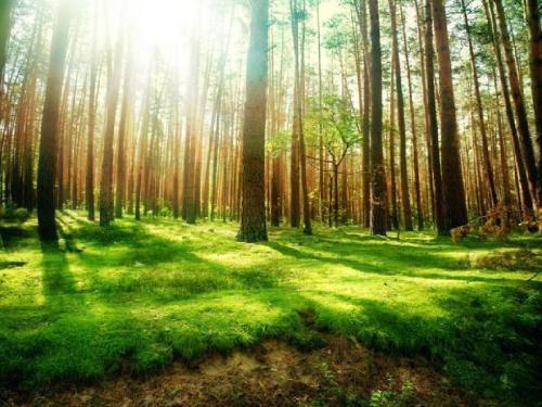 关于江西省东固山森林火灾高风险区综合治理项目林火预警监测系统采购项目