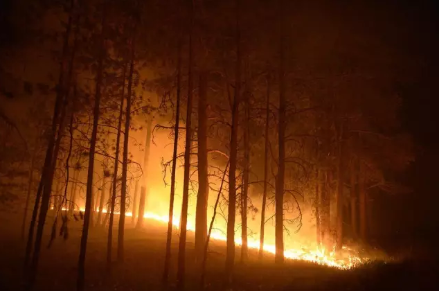森林防火无线物联网监控系统解决方案