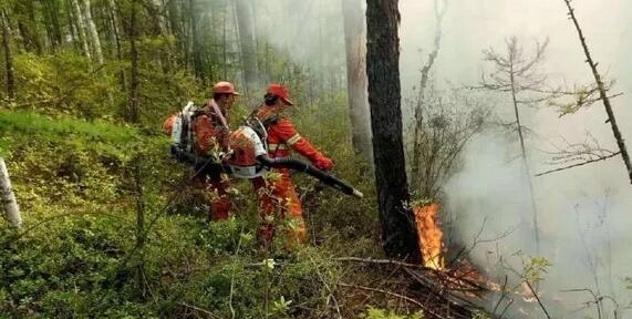 潼关县加强林业管理 提升生态环境质量