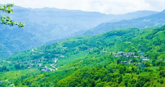 """临武县38万亩生态公益林成为乡村""""森林公园"""""""