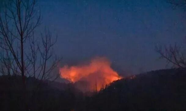 森林防火警钟长鸣 从这些警示案例中吸取教训!